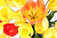 Free Tulips Royalty Free Stock Photography - 19705727