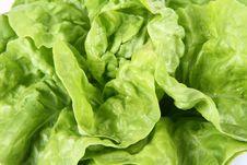 Free Lettuce Stock Photos - 19707423
