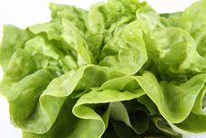 Free Lettuce Stock Photo - 19707570