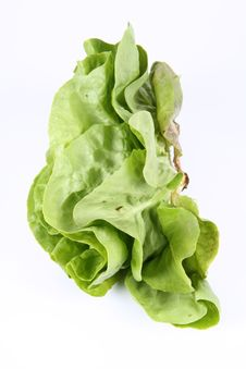 Free Lettuce Royalty Free Stock Images - 19707619
