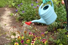 Free Watering Flowers Royalty Free Stock Photos - 19708248