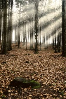 Free Light In The Forest Stock Images - 19708254