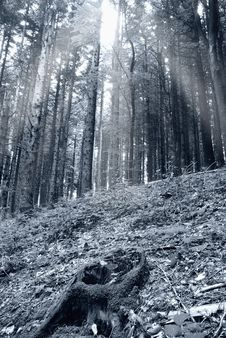 Free Mystical Forest Royalty Free Stock Images - 19708299