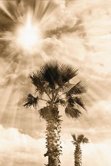 Palm In Autumn Royalty Free Stock Images