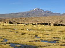 Uturunku Volcano, Altiplano, Bolivia. Royalty Free Stock Photo