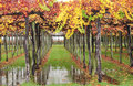 Free Colourful Autumn Vines Royalty Free Stock Images - 19716919