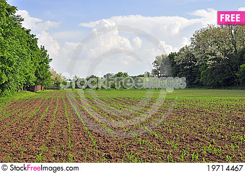 Free Plowed Area Royalty Free Stock Photography - 19714467