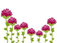 Free Pink Roses Royalty Free Stock Photo - 19713335