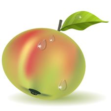 Free Ripe Apple Stock Photography - 19713962