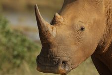 Free White Rhino Stock Photography - 19714582