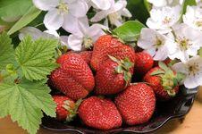 Free Berry. Royalty Free Stock Photos - 19715678
