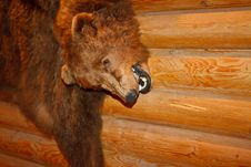 Free Brown Bear Pelt Stock Photo - 19717590
