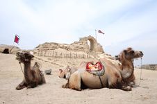 Free Camels In Front Of An Old Castle Royalty Free Stock Image - 19718096