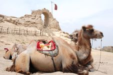 Free Camels In Front Of An Old Castle Stock Photos - 19718113