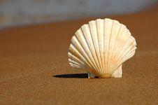 Free Seashell On Sand Royalty Free Stock Image - 19718156