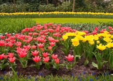 Free Multicolored Flowerbed . Royalty Free Stock Photography - 19719327