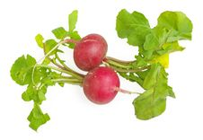 Free Fresh Radishes Royalty Free Stock Image - 19719376