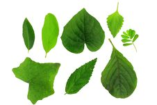 Free Leaf Stock Images - 19719624