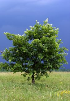 Free Lonely Tree With A Storm In Its Back Royalty Free Stock Image - 19719856