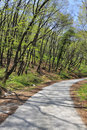 Free Curved Forest Road Royalty Free Stock Photo - 19720275