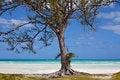 Free Lonely Tree Royalty Free Stock Photos - 19720668