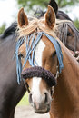 Free Decorated Horse Royalty Free Stock Photography - 19724297