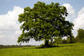 Free Tree In The Field Royalty Free Stock Photo - 19727985