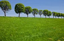 Free Green Field With Trees Stock Image - 19721191