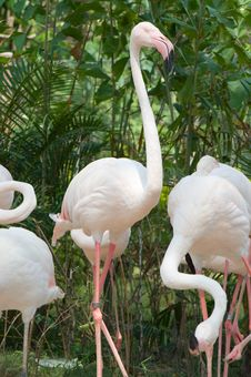 Free Flamingo Stock Photo - 19721210
