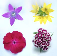 Free Set Of Different Flowers Stock Photos - 19721743