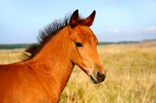 Free Horse Stock Photo - 19722030