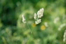 Free Grass Royalty Free Stock Photography - 19724167