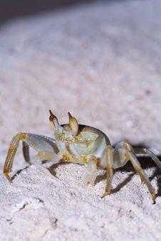 Free Maldive Crab Stock Image - 19724471