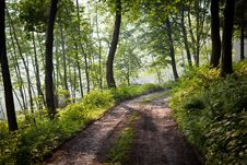 Free Lovely Forest Path In Early Morning Sunshine Royalty Free Stock Image - 19724646