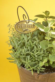 Fresh Mixed Herbs In A Planter Royalty Free Stock Photos