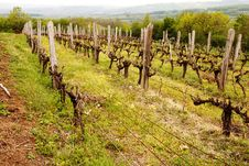 Free Vineyard Royalty Free Stock Images - 19726989
