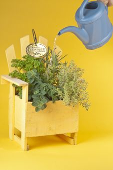Free Fresh Mixed Herbs In A Wood Planter Stock Photography - 19727012