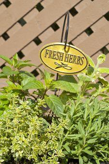 Free Fresh Mixed Herbs Royalty Free Stock Photos - 19727028