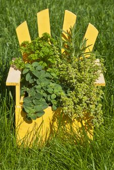 Free Fresh Mixed Herbs In A Wood Planter Stock Images - 19727054