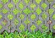 Free Fern Moss In The Corner Bricks. Stock Image - 19728201
