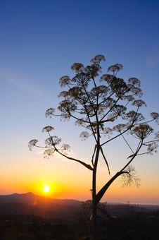 Free Sunrise Landscape Stock Photo - 19728690