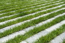 Free Grass Stripes, Raw Stock Image - 19728721