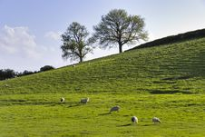 English Field In Spring Stock Image