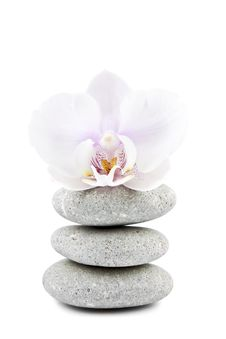 Free Orchid And Stones Royalty Free Stock Photo - 19728885