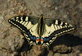 Free Butterfly Royalty Free Stock Photography - 19731397