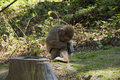 Free Macaque Monkey Stock Photos - 19734343