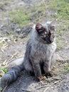 Free Grey Cat Royalty Free Stock Photos - 19738998