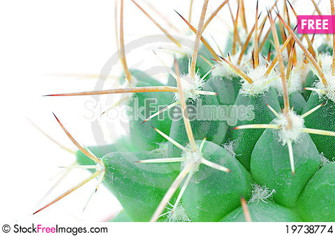 Free Close Up Of Small Cactus Stock Images - 19738774