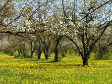 Free Apple Garden Royalty Free Stock Photos - 19731738