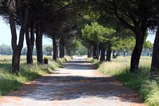 Free Pine Alley Royalty Free Stock Image - 19732546